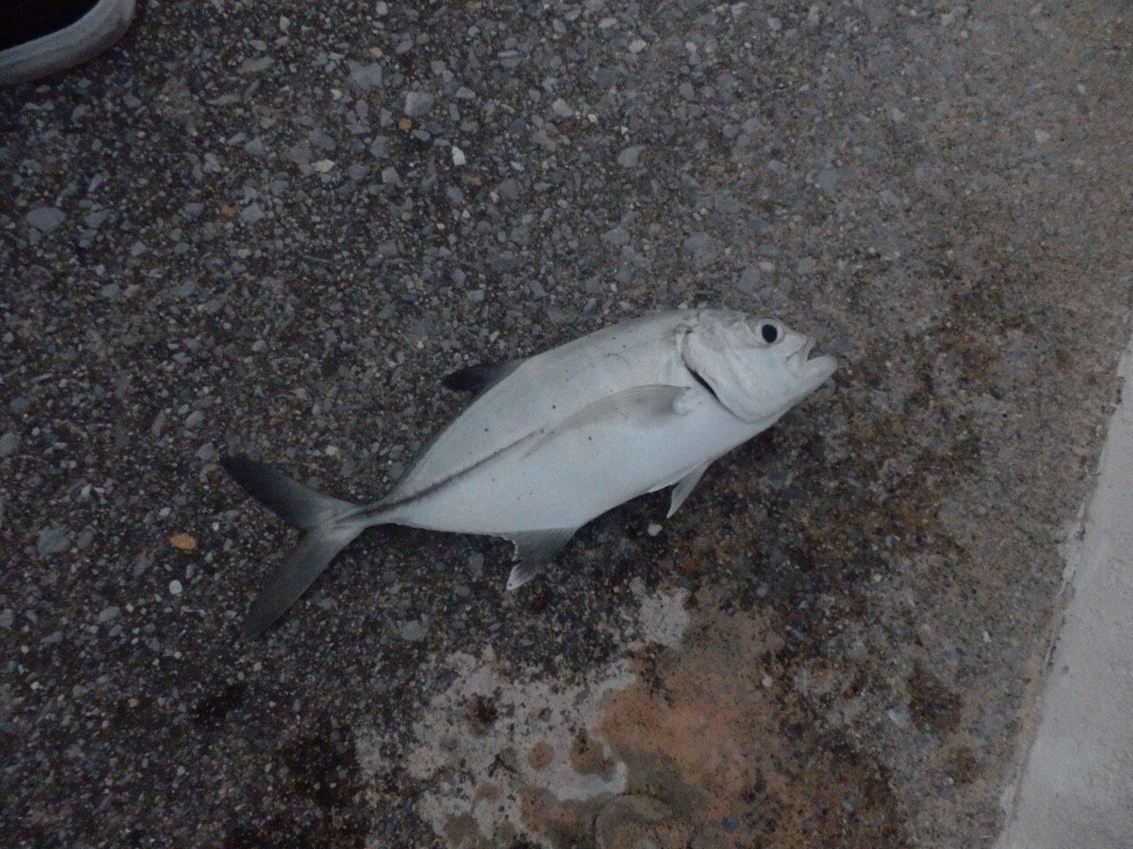 ゆしぴさんの投稿画像,写っている魚は