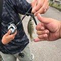 りょーとんさんの茨城県北相馬郡での釣果写真