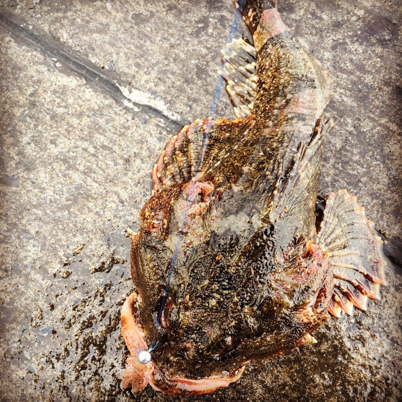 0138STYLEさんの投稿画像,写っている魚はカジカ