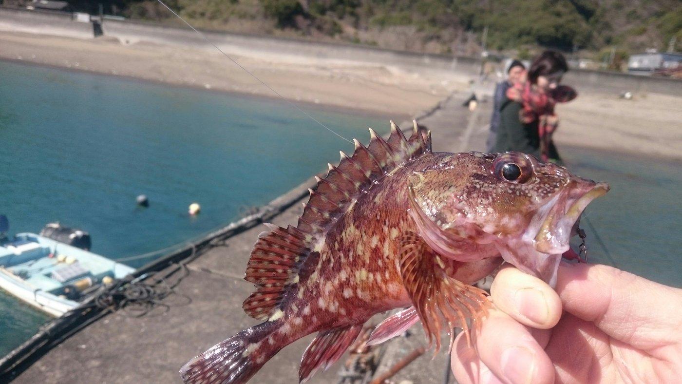 さんきちさんの投稿画像,写っている魚はカサゴ
