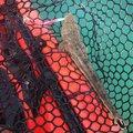 もっぴーさんの福岡県宗像市でのコチの釣果写真