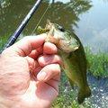 スーさんさんの長野県飯山市での釣果写真