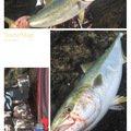 😤アキヒロ😤さんの北海道奥尻郡での釣果写真