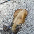 LaLaLaさんの高知県須崎市でのアオリイカの釣果写真