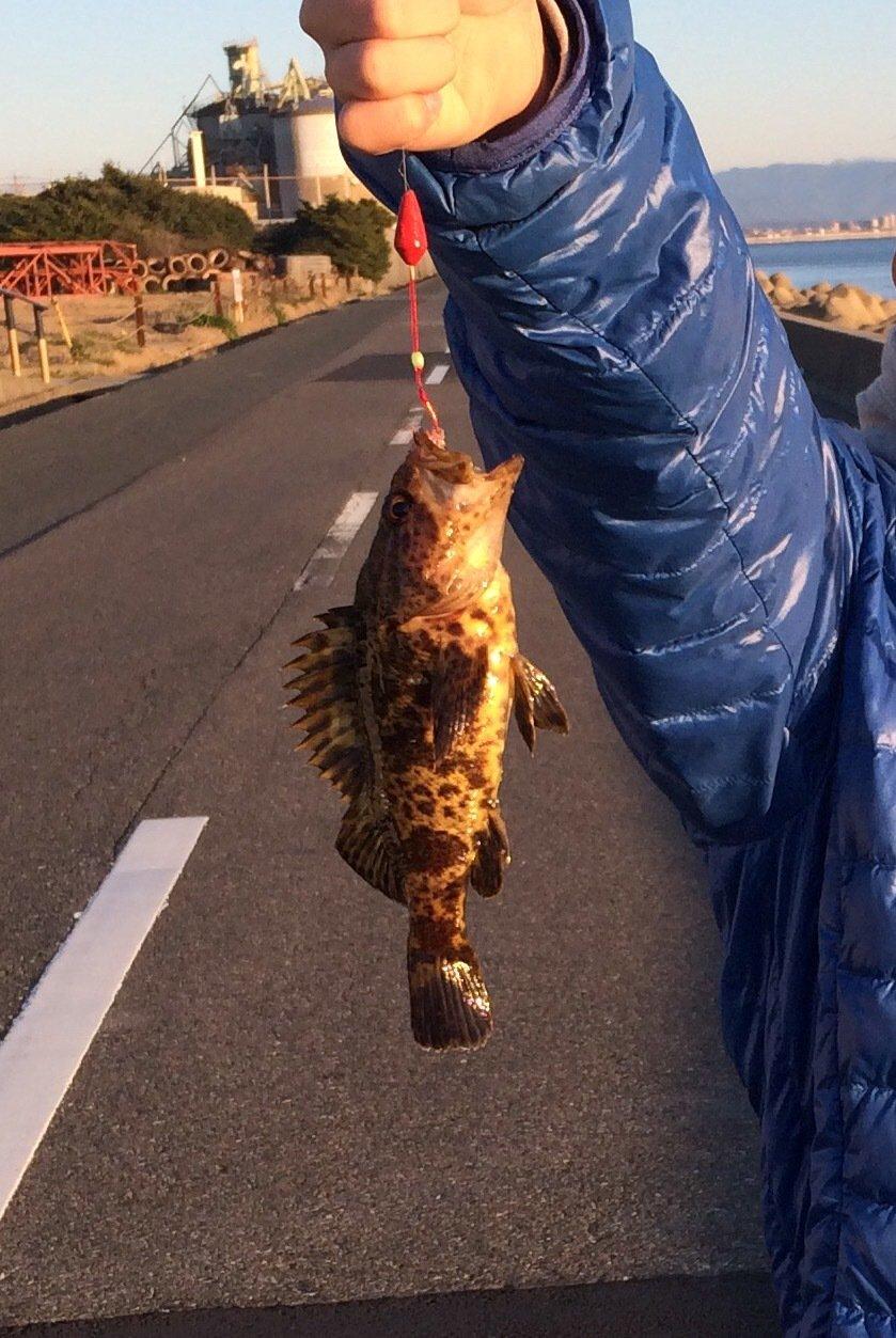 ひろきさんの投稿画像,写っている魚はクロソイ