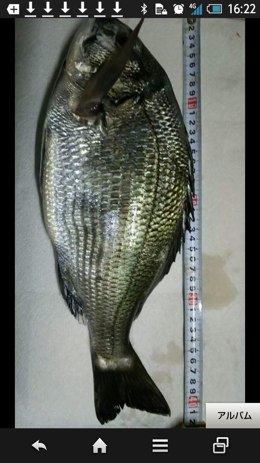 磯辺爆釣会アングラーD&yamさんの投稿画像,写っている魚はクロダイ