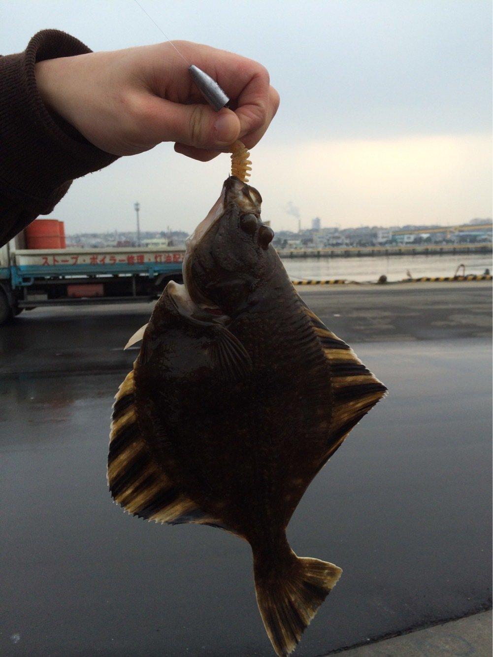 ちゃんたかさんの投稿画像,写っている魚はカレイ