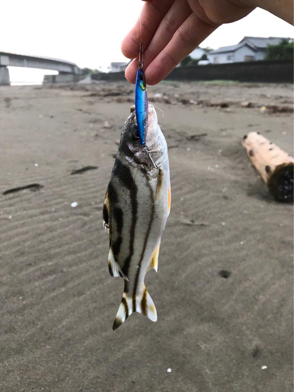 北関東のうつけ者さんの投稿画像,写っている魚はコトヒキ