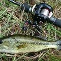 ぴやーんさんの和歌山県日高郡での釣果写真