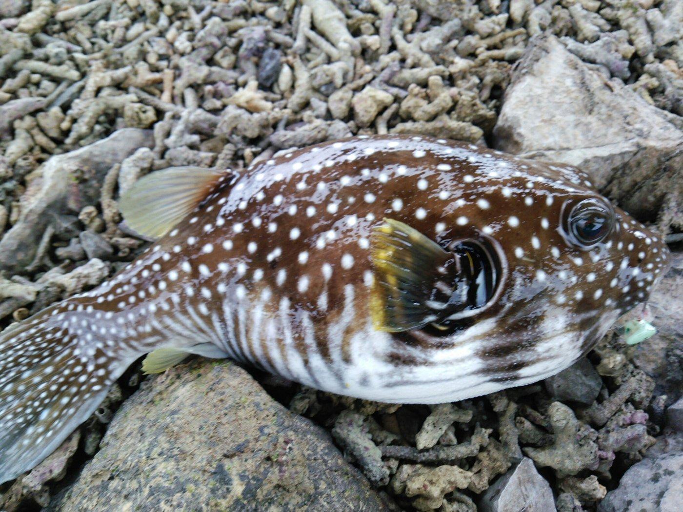 ぼびぃさんの投稿画像,写っている魚は