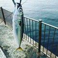 satoさんの兵庫県宝塚市での釣果写真