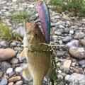 たかはたさんの埼玉県大里郡での釣果写真