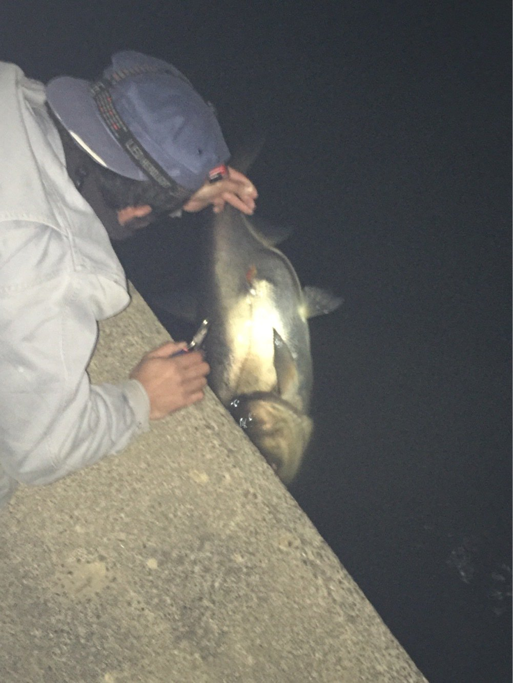 kajiさんの投稿画像,写っている魚はハクレン