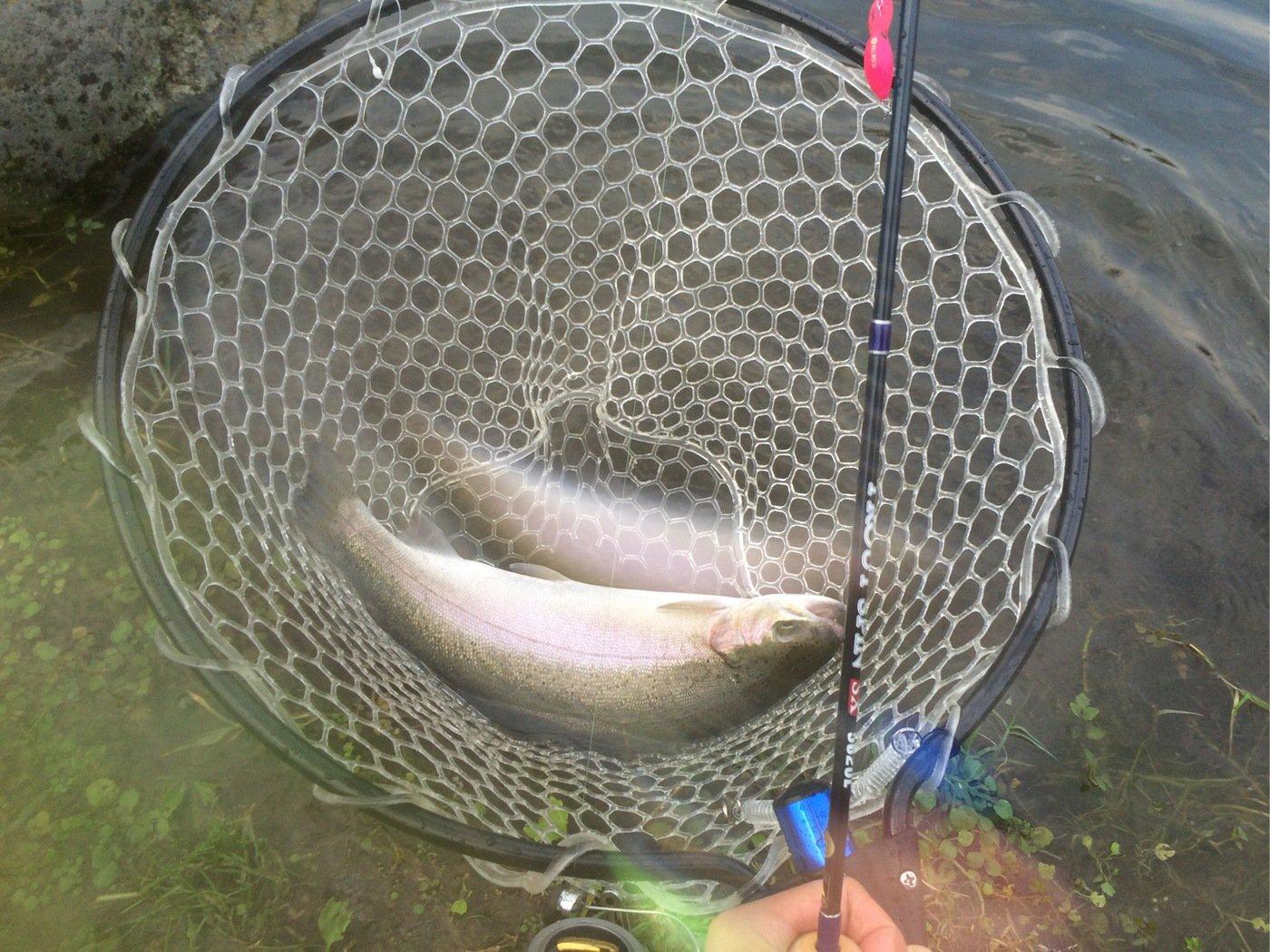 藤原世樹さんの投稿画像,写っている魚はニジマス