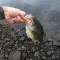 佐野さんの山梨県富士吉田市での釣果写真