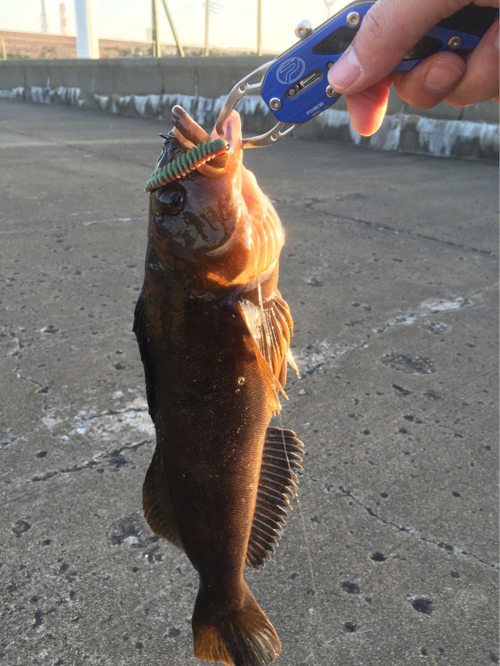 たけちゃんさんの投稿画像,写っている魚はアイナメ