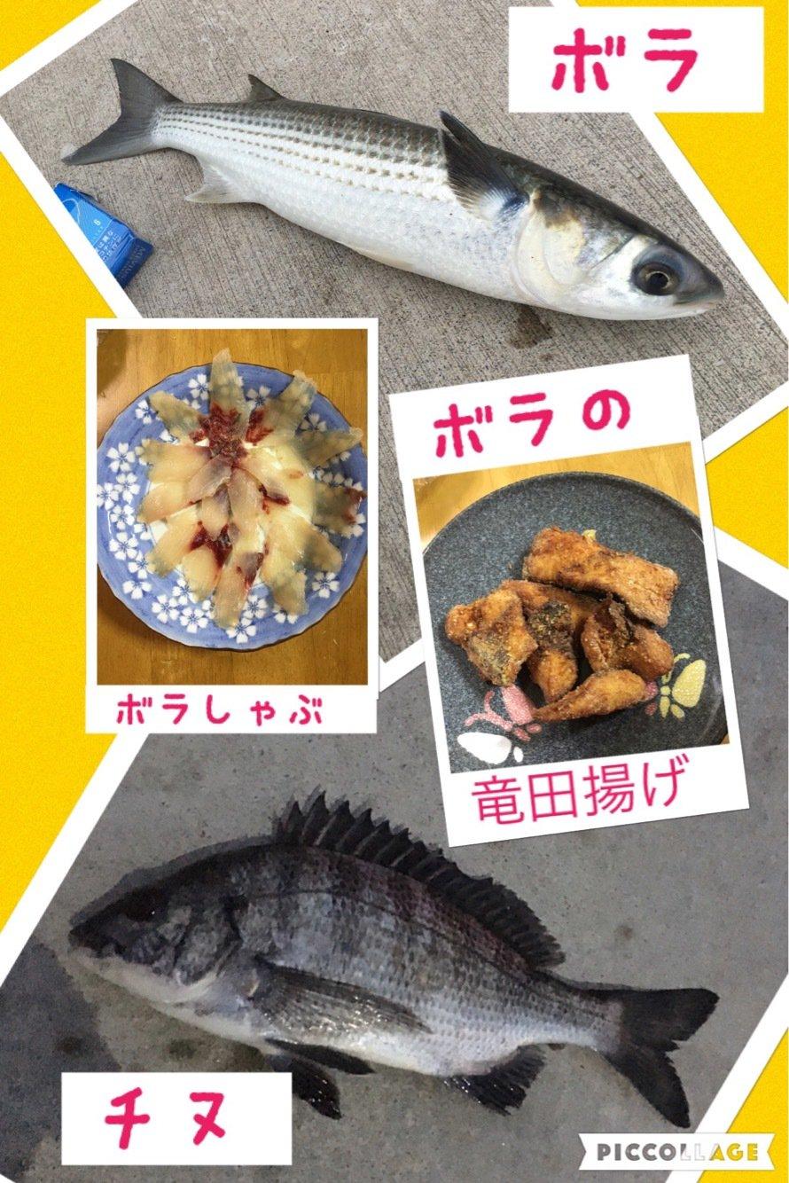 Angler🇯🇵TAKASHIさんの投稿画像,写っている魚はボラ