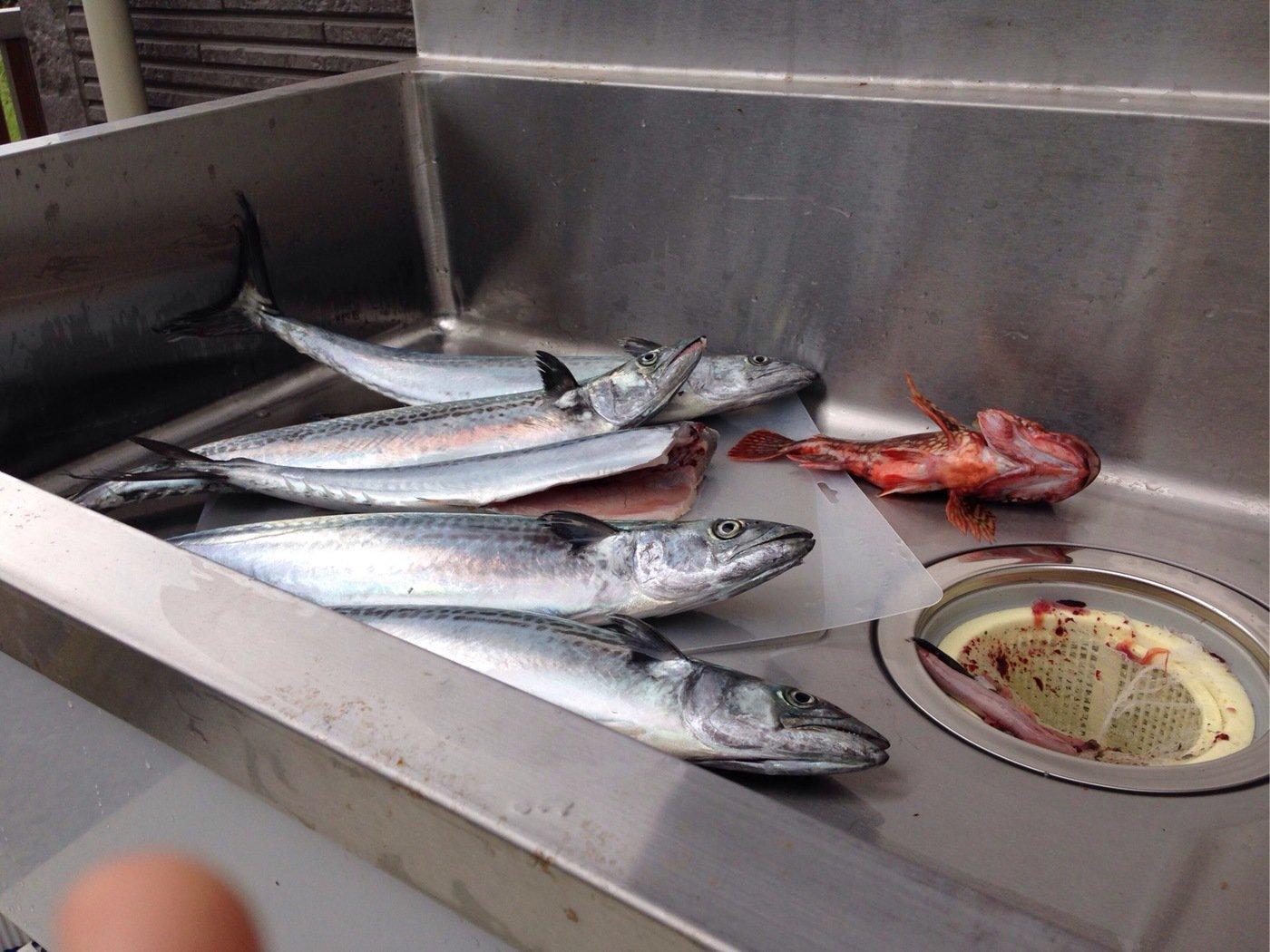 massaさんの投稿画像,写っている魚はサワラ