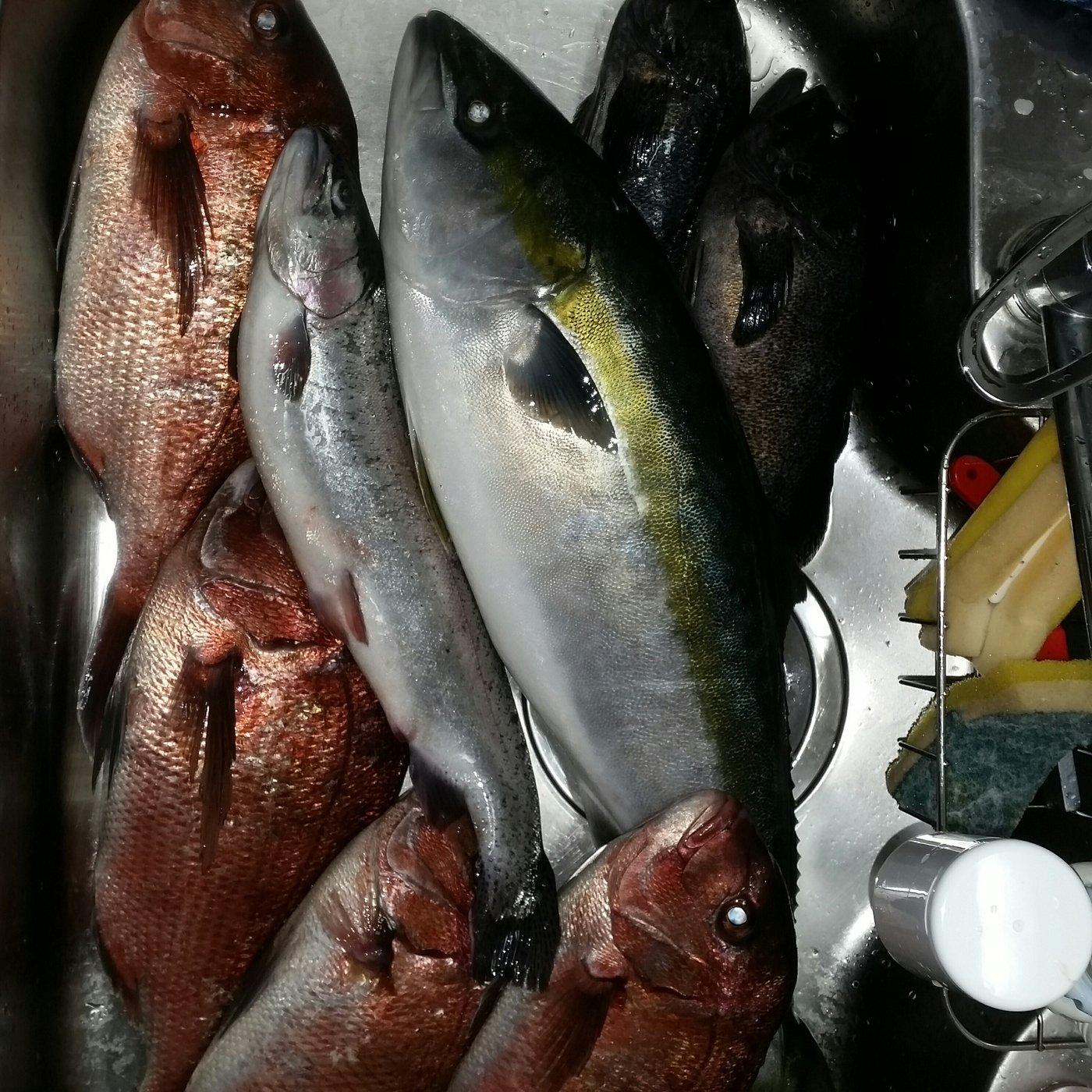 しばさんの投稿画像,写っている魚は
