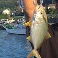 けんたさんの千葉県君津市での釣果写真
