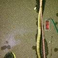 勇釣会 勇さんの三重県でのウナギの釣果写真