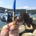 ロックマンさんの兵庫県たつの市での釣果写真