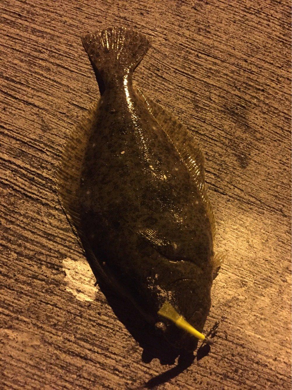 ゴリラさんの投稿画像,写っている魚はヒラメ