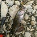 かぶやまさんの北海道三笠市での釣果写真