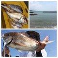 け〜たゴリラさんの長崎県西海市でのマダイの釣果写真