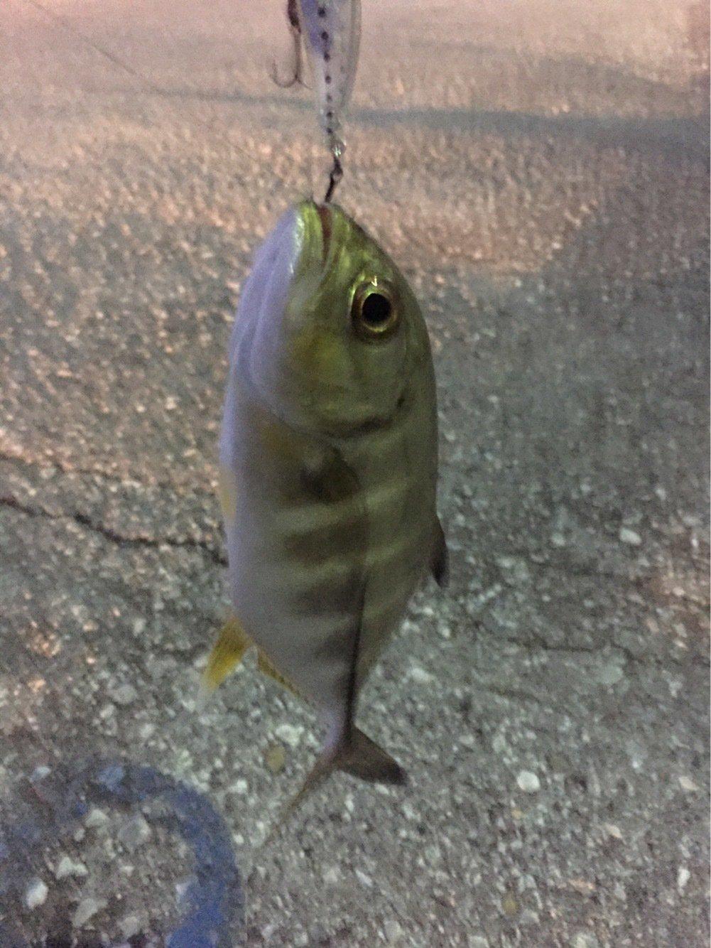 Megさんの投稿画像,写っている魚は