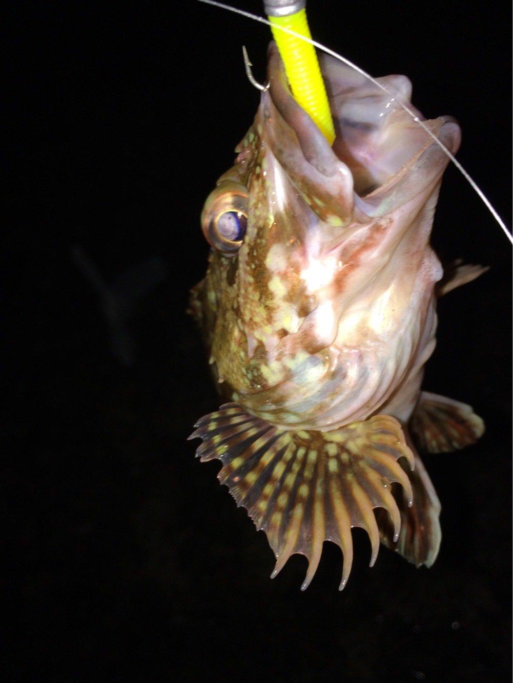 マルコムさんの投稿画像,写っている魚はカサゴ