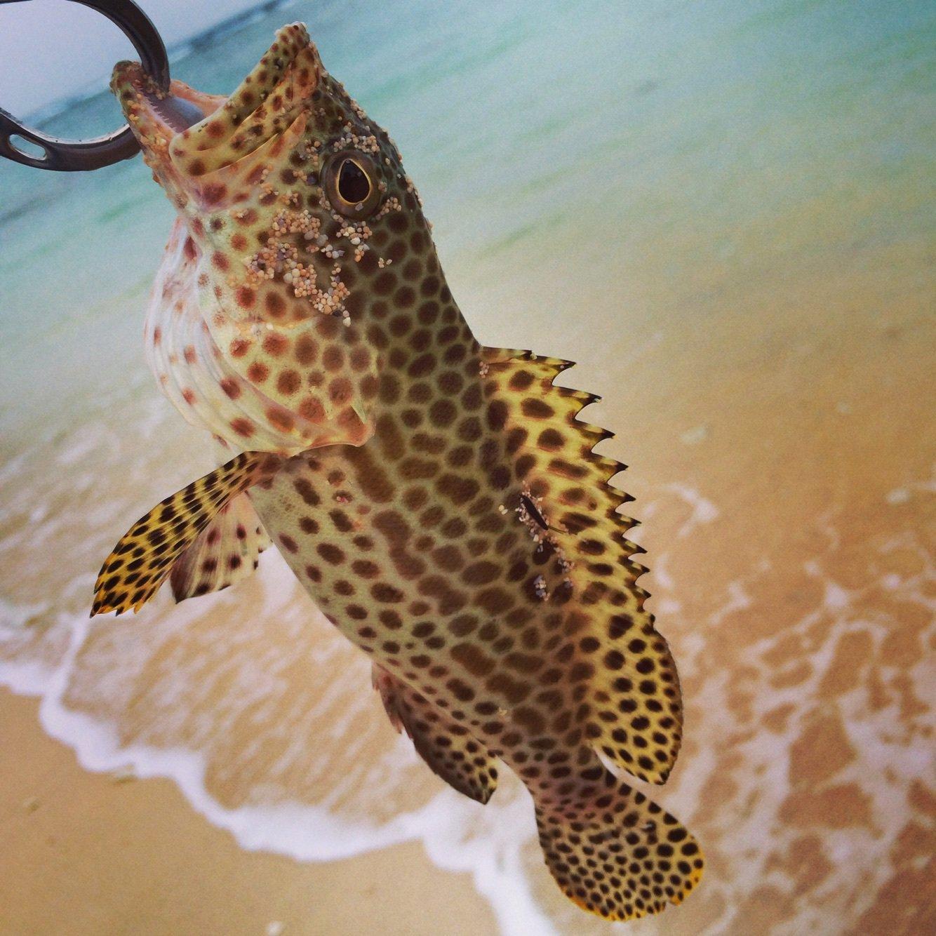 KouyaTakadaさんの投稿画像,写っている魚は