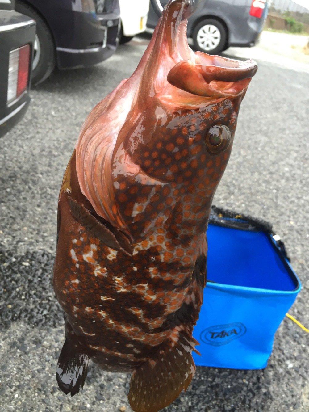 竜さんの投稿画像,写っている魚は