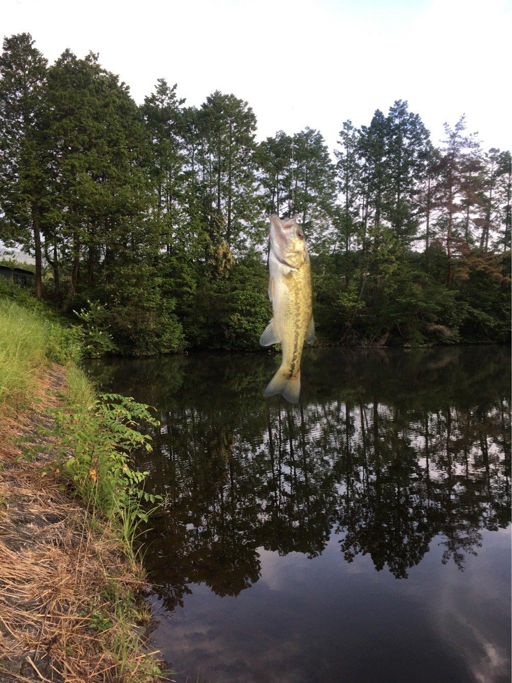 yasさんの投稿画像,写っている魚はブラックバス