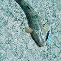 adidasさんの山口県山陽小野田市での釣果写真