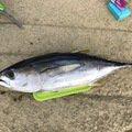 Nao Yamaさんのマグロの釣果写真
