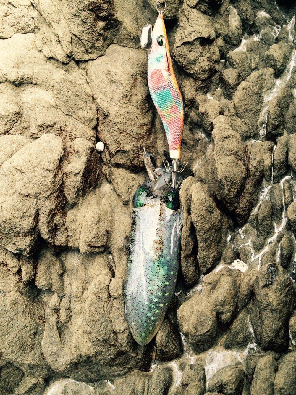 ツカヲさんの投稿画像,写っている魚はアオリイカ