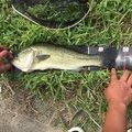 ぐっちーのさんの佐賀県神埼市での釣果写真