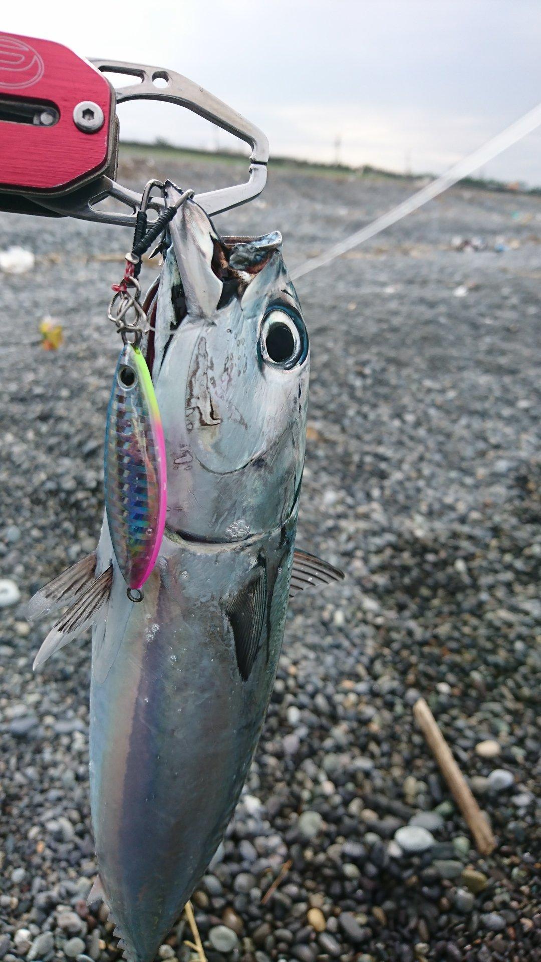 ぜっとさんの投稿画像,写っている魚は