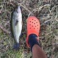 ディープインパクトさんの福島県白河市での釣果写真