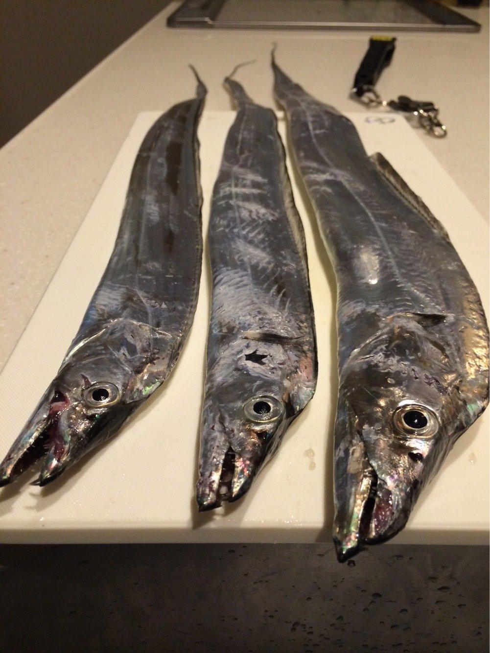 ガズさんの投稿画像,写っている魚はタチウオ