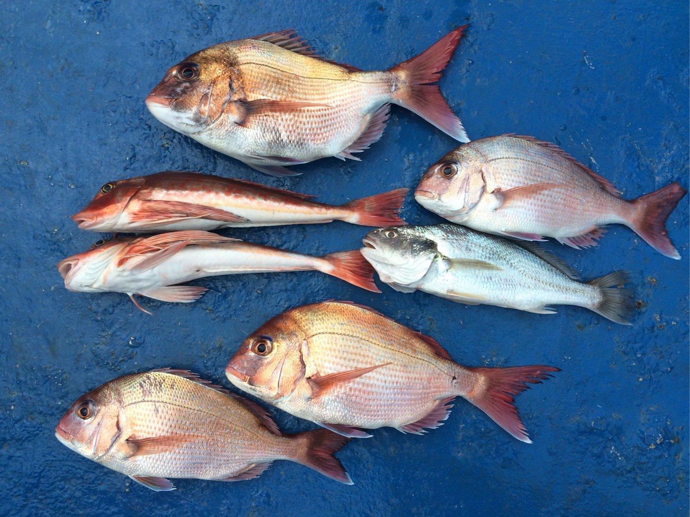 Keikoさんの投稿画像,写っている魚はホウボウ