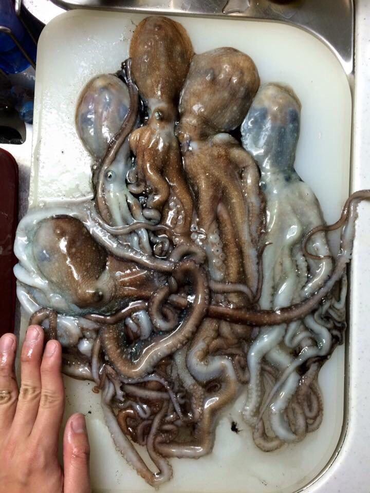 竜太朗さんの投稿画像,写っている魚はテナガダコ