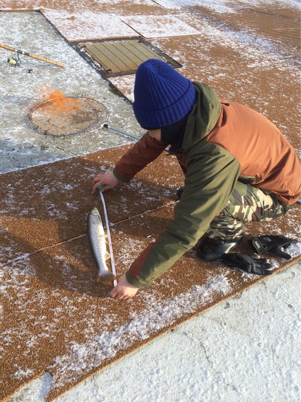 あべし。さんの投稿画像,写っている魚はアメマス
