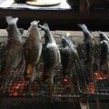 Rさんの北海道北広島市での釣果写真