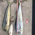 ロッキーさんの鹿児島県南九州市でのシイラの釣果写真