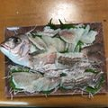 k.kobayasiさんの三重県いなべ市での釣果写真