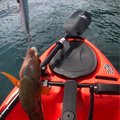もっぴーさんの福岡県福津市でのアカササノハベラの釣果写真