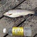 渡辺さんの北海道網走郡での釣果写真