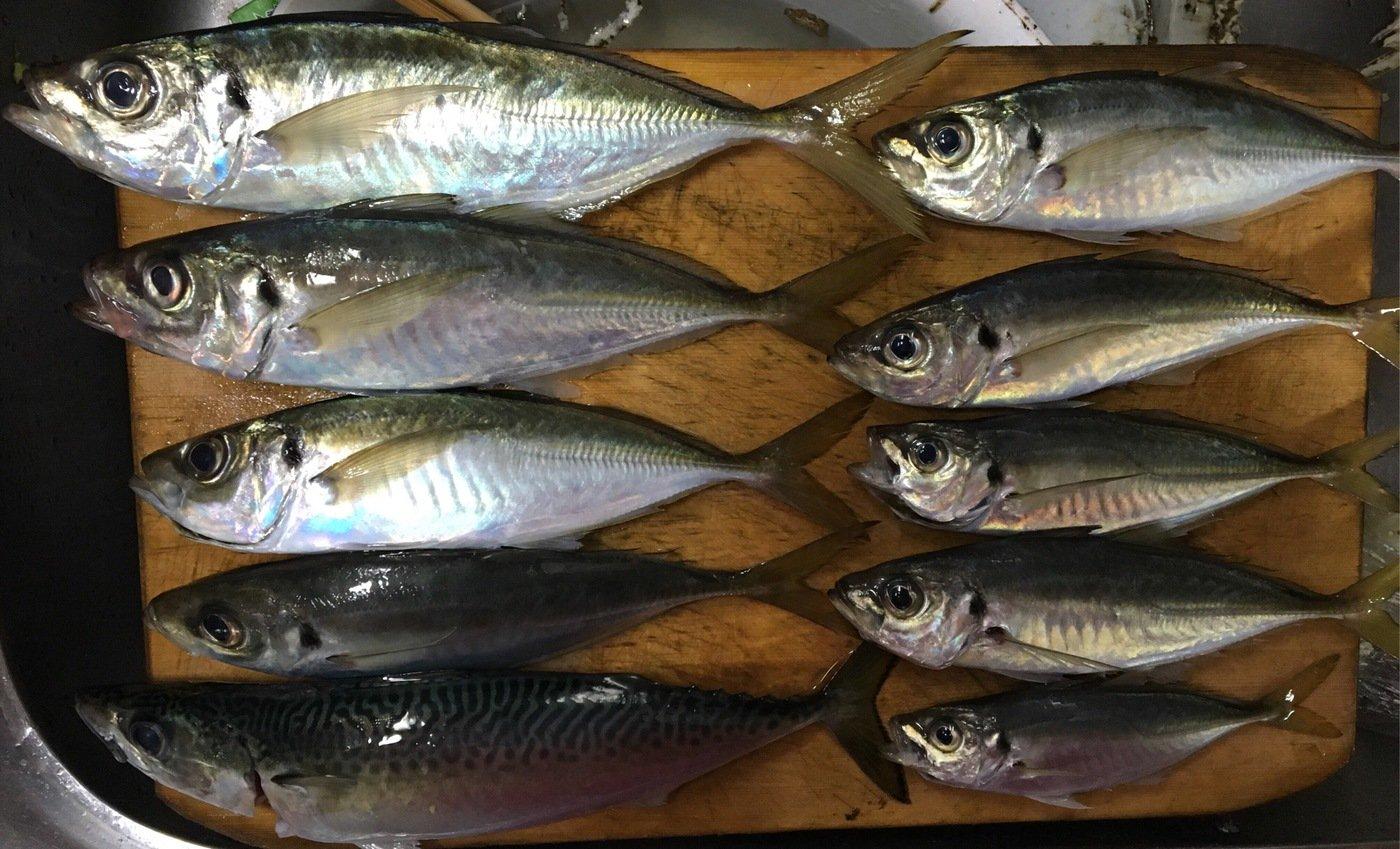 釣りキチおじさんさんの投稿画像,写っている魚は